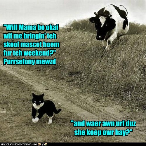 """Will Mama be okai wif me bringin' teh skool mascot hoem fur teh weekend?"" Purrsefony mewzd ""and waer awn urf duz she keep owr hay?"""