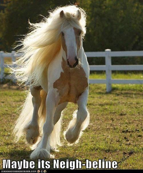 pun mabeline funny horse - 7592150016