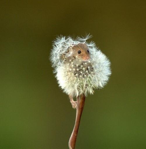 dandelion sneeze - 7592253696
