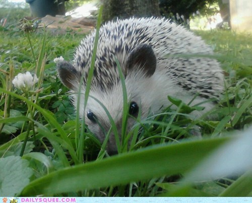 summer ridiculously photogenic hedgehog