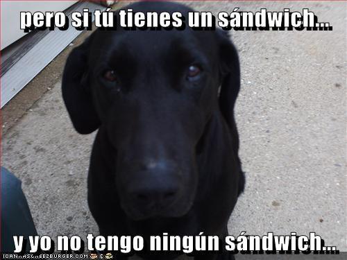 Cheezburger Image 7592449280