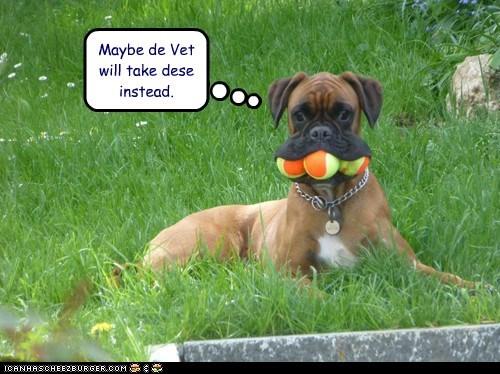 balls neutered vet funny - 7592542464