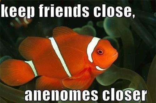 puns,clownfish,fish,sea anemones,funny