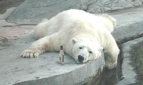 wtf drunk crunk critters bear funny - 7592721664
