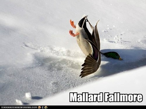 presidents pun mallard faceplant - 7592790272