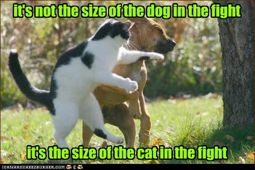 cat fight boxing dogs - 7593085696