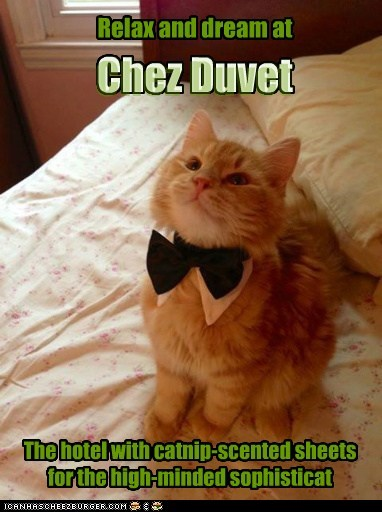 Relax and dream at The hotel with catnip-scented sheets for the high-minded sophisticat Chez Duvet Chez Duvet Chez Duvet