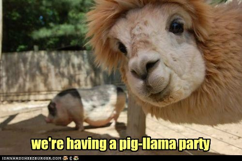 we're having a pig-llama party