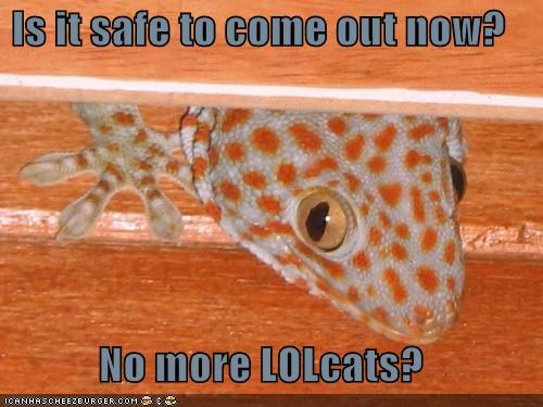 Is it safe to come out now?  No more LOLcats?