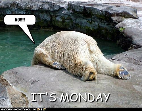 polar bears,mondays,funny
