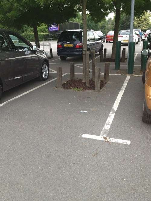 trees,parking lot,funny,there I fixed it