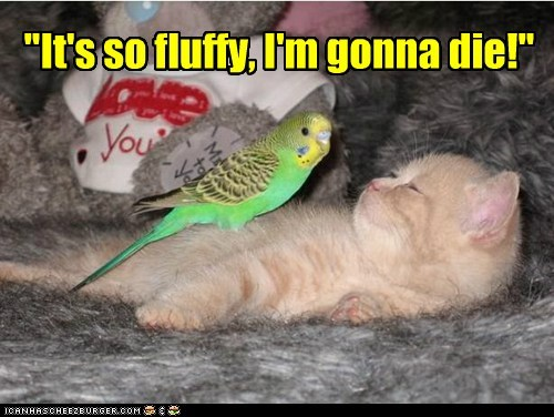 cat,despicable me,parakeet,tweet,funny
