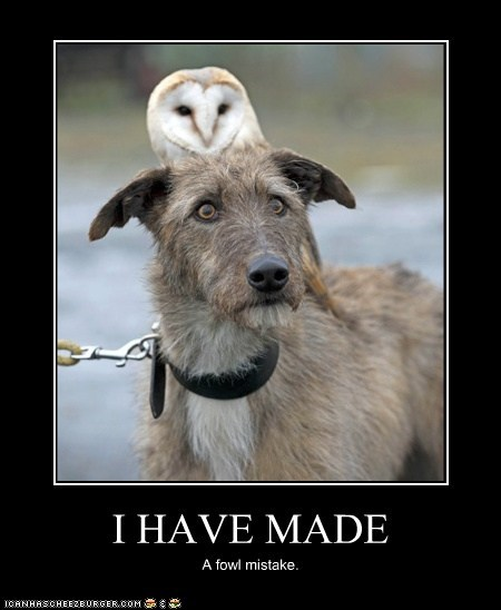 dogs foul Owl funny - 7596203776