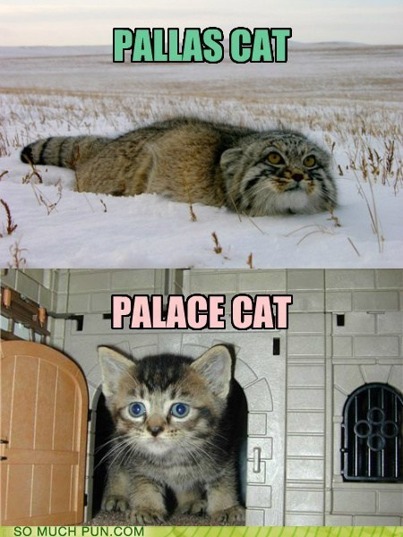 puns Cats funny - 7596855808