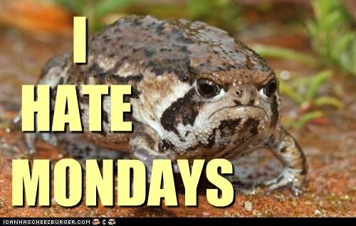 toad,grumpy,funny,monday