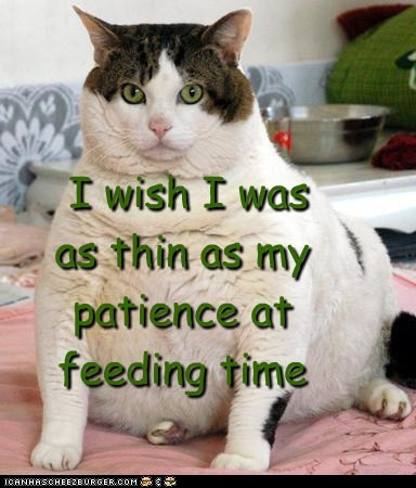 I wish I was as thin as my patience at feeding time