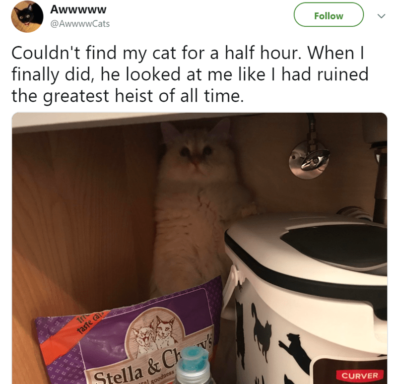 adorable cat stories