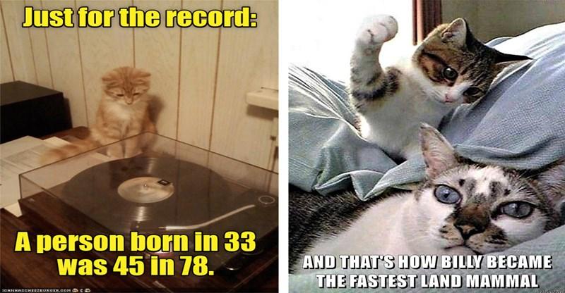 funny cat memes lolcats lolcat funny memes Memes funny cats Cats cat memes - 7598085