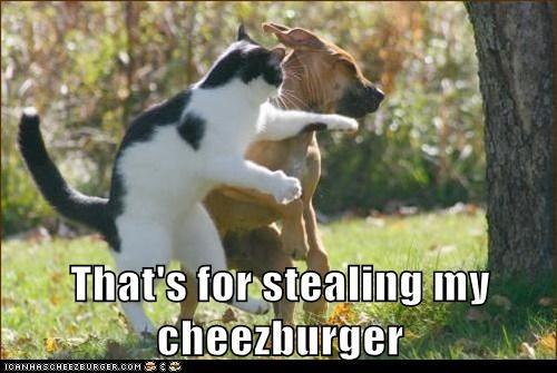 Cheezburger Image 7598761728