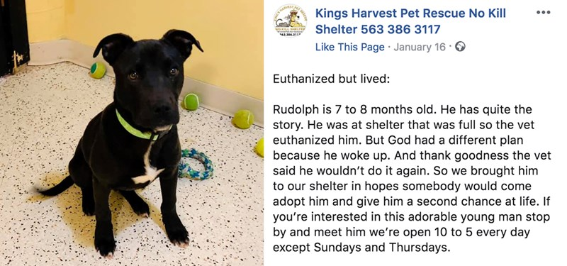 dog survives euthanasia