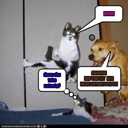 Cheezburger Image 7599280384