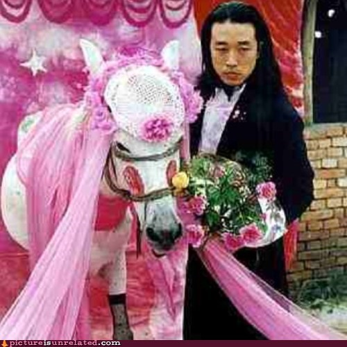art mules horses to marry a mule - 7599595520