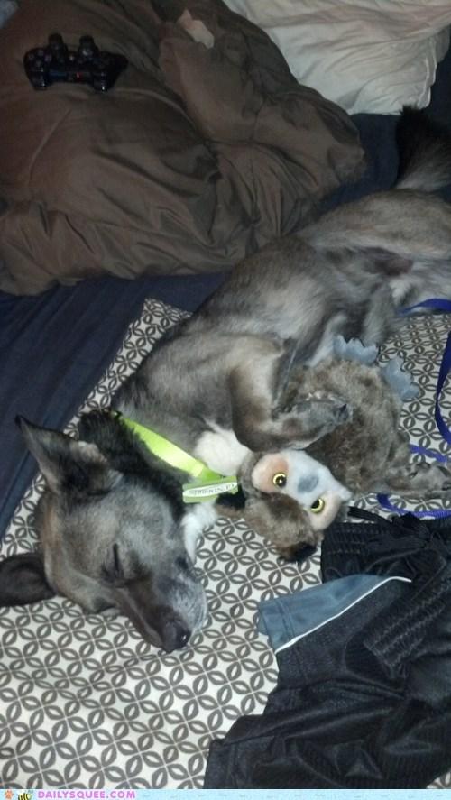 stuffed animal cuddle dogs
