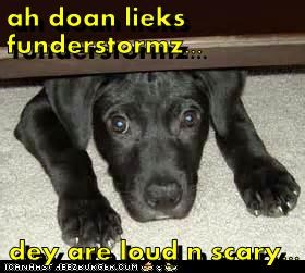 thunderstorm puppy cute scared - 7600904448