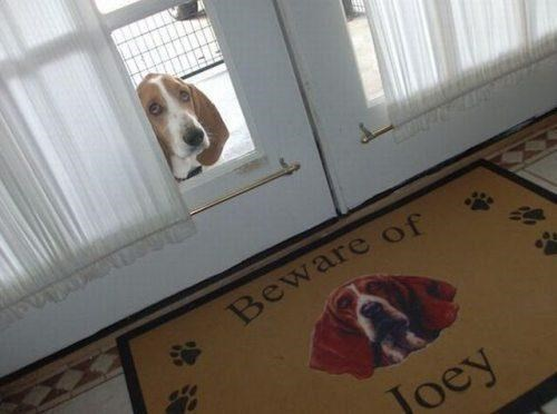 beware of dog,welcome mat,basset hound,funny