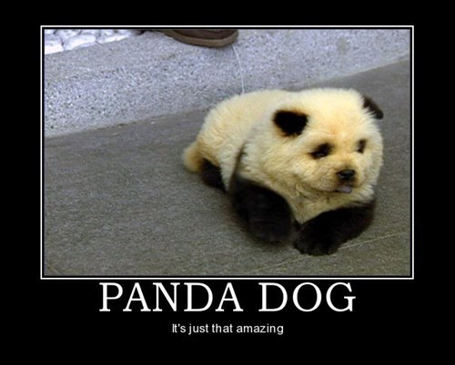 panda amazing dogs funny animals - 7601149440