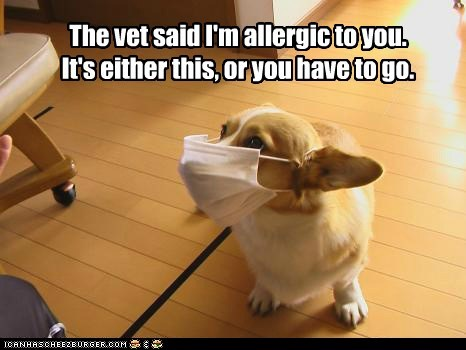 The vet said I'm allergic to you. It's either this, or you have to go.