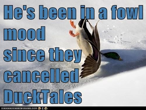 He's been in a fowl mood since they cancelled DuckTales