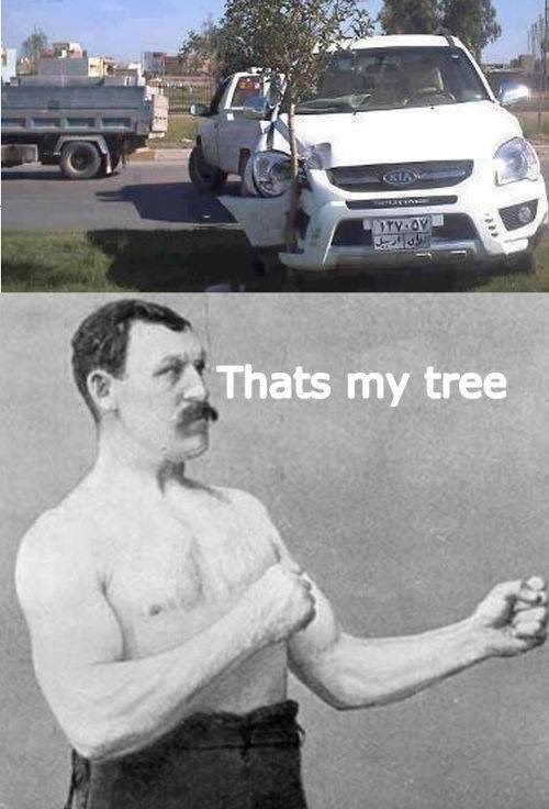 trees,IRL,overly many man,Memes