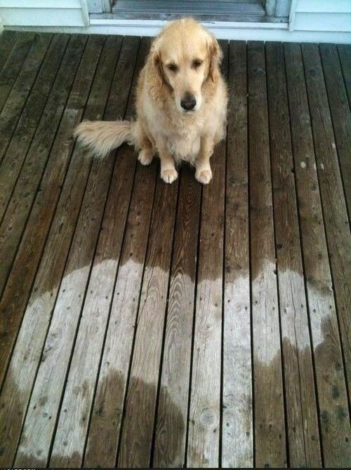 nap dogs funny rain - 7601503744