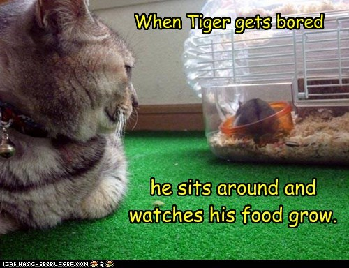 When Tiger gets bored...