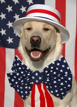 pets,hats,cute,holiday,fourth of july,costume,america