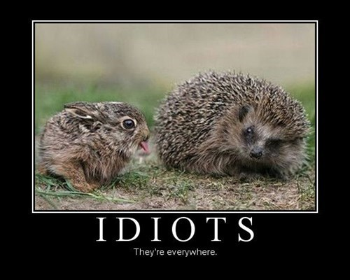 bunnies idiots funny animals - 7601786112