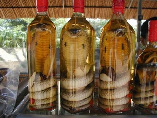 wtf cobra booze creepy funny snake - 7601948416