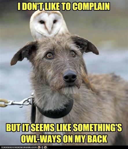 pun Owl funny - 7602243072