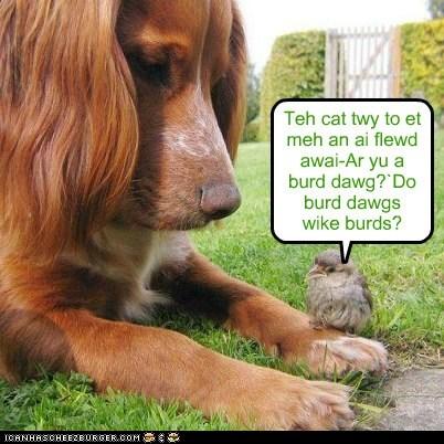 Teh cat twy to et meh an ai flewd awai-Ar yu a burd dawg?`Do burd dawgs wike burds?