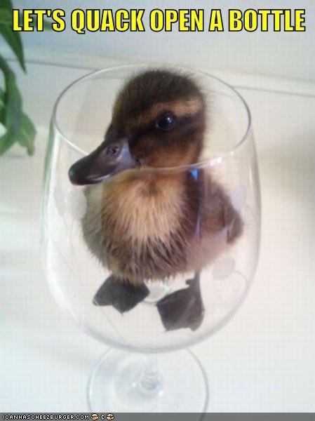 duckling,wine,quack,funny,vintage