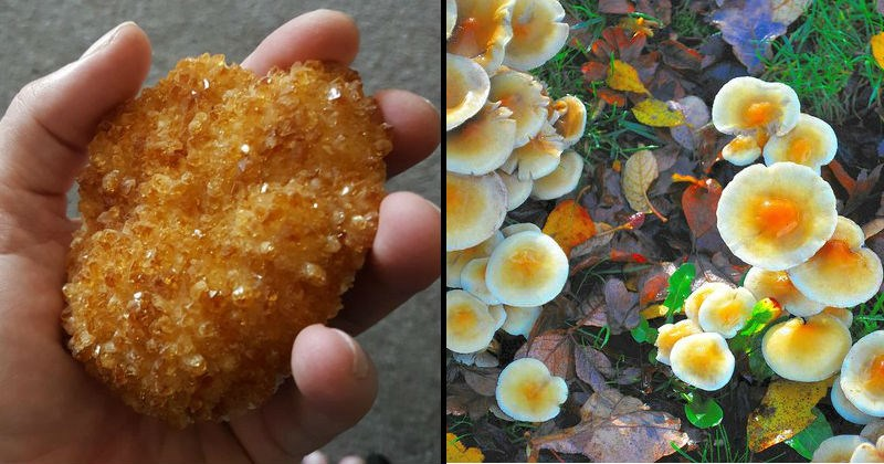 objects that look like food
