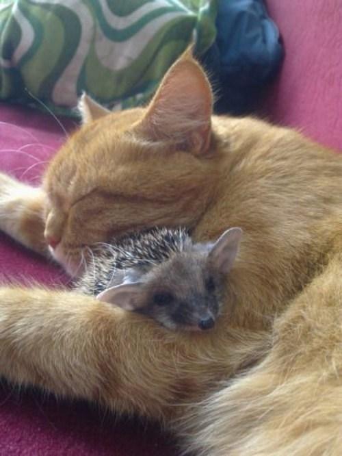 interpecies love friends Cats - 76037