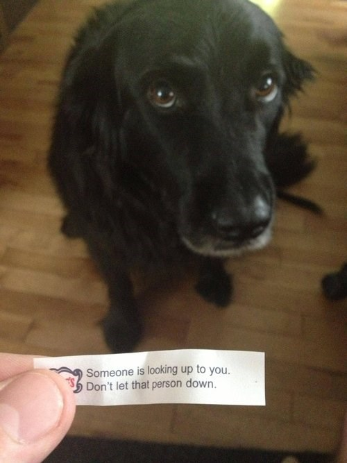 fortune cookie,cute,look up