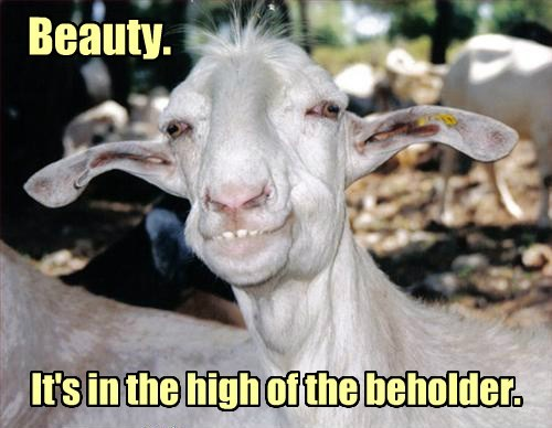 goat,high,beauty