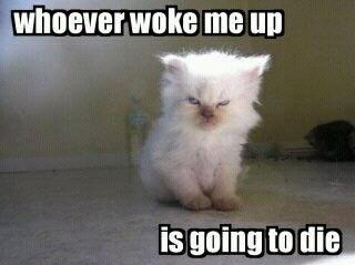 morning,grumpy,funny,waking up
