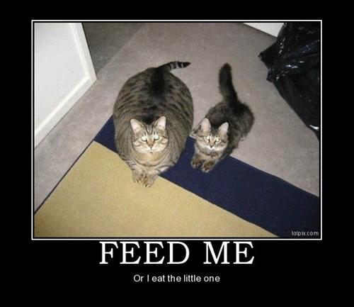 cat tiny fat jokes funny