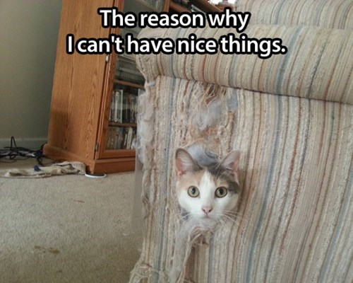 nice things,destroyed,this is why,couch,funny