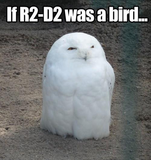 r2d2 wtf star wars Owl funny - 7604173568