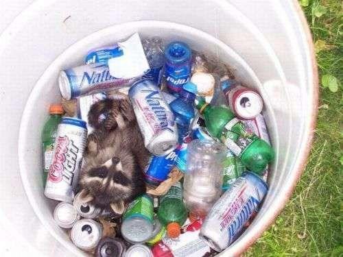 crunk critters,raccoon,jackpot,funny